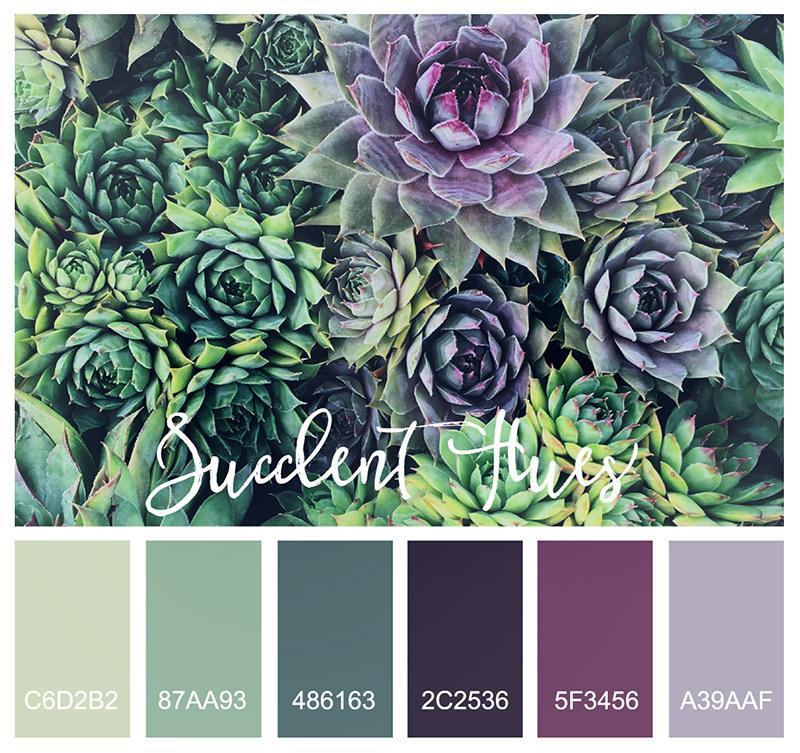 large-succulenthues-jpg-a01d33a6b008dde11d930ee3a069b9f7